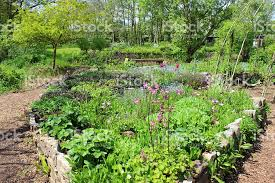 image of ornamental vegetable garden herb garden with raised beds