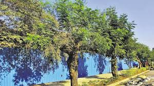 mumbai s green cover less than half a tree a person says ngo