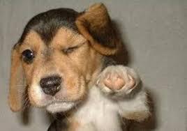 Pet Pet Wants On The Avenue Ky Pet Food U0026 Pet Accessories Natural
