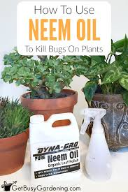 neem oil insecticide what is it and how to use neem oil on plants