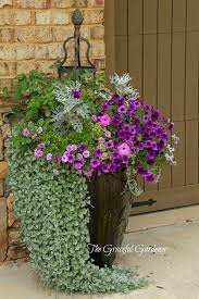 graceful containers the graceful gardener container gardening