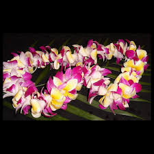 Leis Flowers - plumeria lei introduced to the hawaiian islands in the 1800s