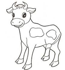 baby cow coloring pinterest baby cows cow and calves