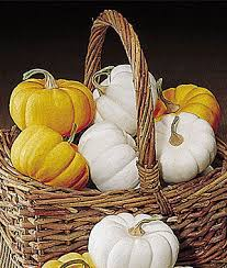 mini harvest blend pumpkin seeds and plants vegetable gardening