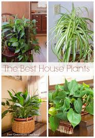 common house plants my mom her plants four generations one roof