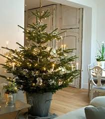 Decorated Live Christmas Trees Tabletop by Best 25 Potted Christmas Trees Ideas On Pinterest Big Christmas