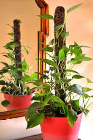 Support For Climbing Plants - totem pole extendible plant supports mosser lee