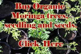buy organic moringa trees ayurvedic medicine buy moringa