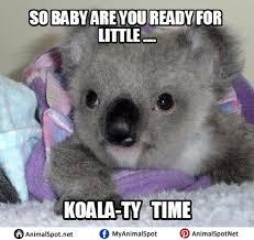 Meme Puns - koala puns memes i love koala bears pinterest adorable