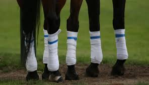 10 essential items for a horse first aid kit