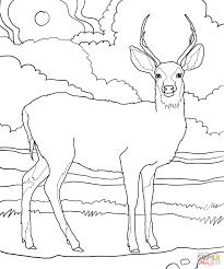 mule deer coloring page free printable coloring pages