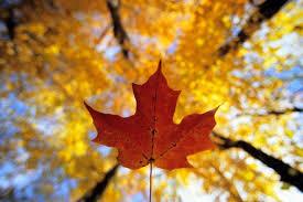track fall colors canada fall foliage reports