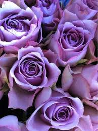 73 best purple roses images on pinterest my love wedding