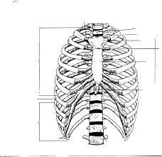 anatomy and physiology skeletal system 706 sagittal section of
