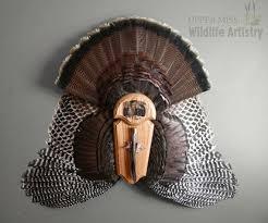 turkey wing mount mount turkey turkey wings fan mount