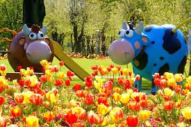 spring flower beds in ventspils come alive ventspils lv