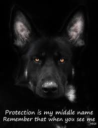 belgian malinois quotes 383 best belgian malinois images on pinterest animals military
