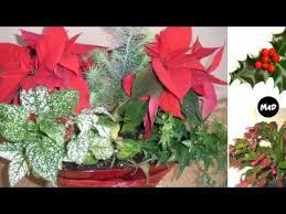 Christmas Plants Christmas Plants Youtube