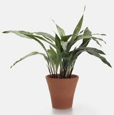 Plants That Don T Need Light 10 Robust Houseplants That Can Survive In Even The Darkest Corner