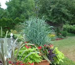 1421 best garden green green grasses images on