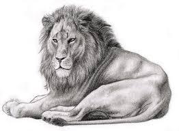 realistic lion by mahogi on deviantart