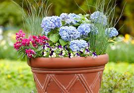 Plant Combination Ideas For Container Gardens Container Garden Combos