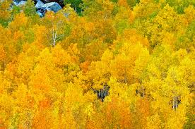 california eastern sierra fall foliage color photography 2009