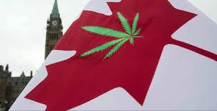 Pot Flag Canada Legal Hurdles Push Pot Patients To Black Market Study