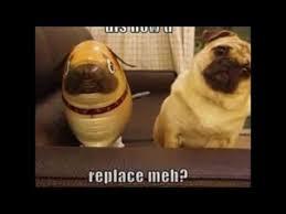 Funny Pug Memes - funny pug memes 2 hillarious pug memes youtube
