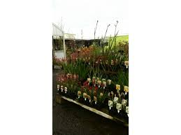 australian native plant nursery brisbane boyanup botanical nursery garden nurseries lot 14 south