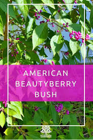 Top Flowering Shrubs - 146 best trees u0026 shrubs images on pinterest garden ideas garden