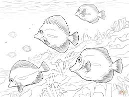 flying fish coloring page free printable coloring pages