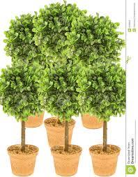 small tree plants solidaria garden