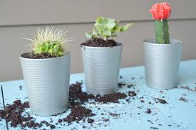 Cactus Planters by Diy Succulent Planters My Big Fat Happy Life