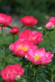 18 best florist flowers images on pinterest florists cut