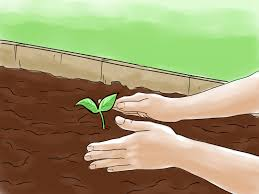 how to grow vegetables with grow lights 10 steps with pictures