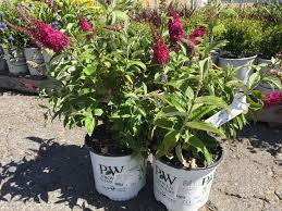 green acres nursery u0026 supply gardening blog planting ideas