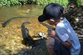 the eels u2013 gotcha traps