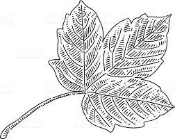 autumn leaf drawing stock vector art 599982456 istock