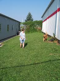 rochelle veterinary hospital veterinarian in rochelle il usa