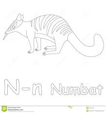 n for numbat coloring page stock illustration image 39701561