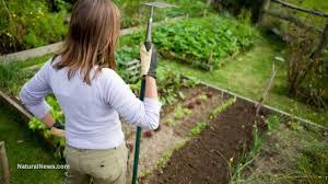 diy 2 self watering garden bed grow produce easily even in the