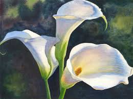 cala lillies calla lilies watercolor painting print by cathy hillegas