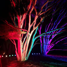 illumination tree lights at the morton arboretum lisle