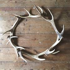 Diy Antler Chandelier 68 Best Trophyz Images On Pinterest Hunting Antler Chandelier