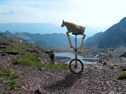 Unicycle Meme - goat on a unicycle blank template imgflip