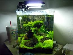 Aquascape Filter 86 Best Aquariums Images On Pinterest Aquarium Ideas
