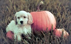pink halloween background free puppy halloween wallpapers u2013 halloween wizard