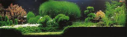 Aquascape Design 7 Aquascaping Styles For Aquariums The Aquarium Guide
