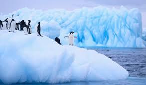 imagenes de la antartida la antártida se ha convertido en la zona cero del calentamiento